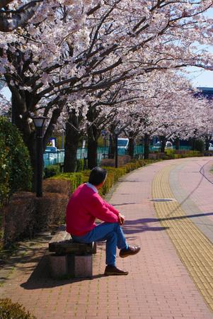 Men stare at Sakura