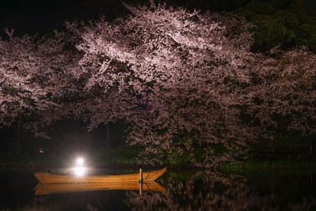 cherry blossoms at night Sankei Garden Stok Fotoğraf