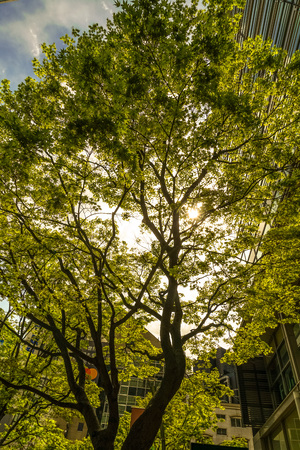 Image of sunlight through leaves Stock Photo