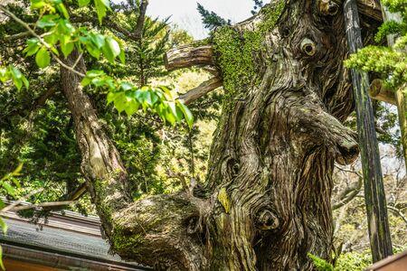 Characteristic trees image