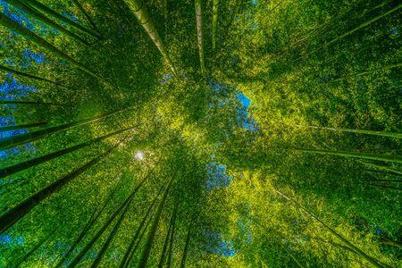 The sun peek from bamboo grove