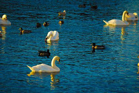 Stockholm lira lake Swan County