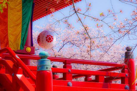 Takamichi mountain of Sakura (Yokohama City, Kanagawa Prefecture)