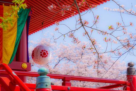 Takamichi mountain of Sakura (Yokohama City, Kanagawa Prefecture) Stok Fotoğraf