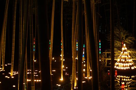 Bamboo grove lighted up (small desk Castle forest of citizen)