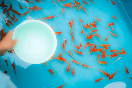 Image of goldfish salvation of summer festival