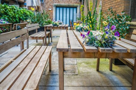 Wooden bench and plant images