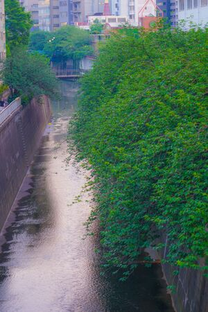 The fresh green of Tokyo Meguro River