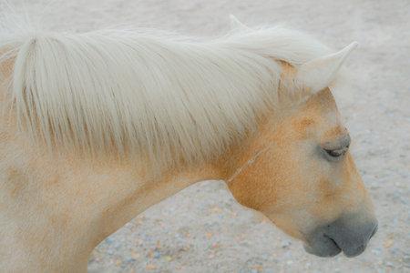 Hakuba, image of silky hair horse