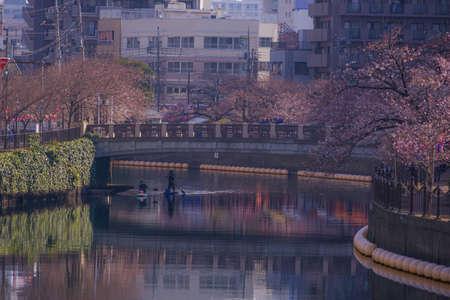 Ooka River Promenade thirds bloom cherry tree Stok Fotoğraf