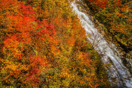 Autumn leaves and waterfall of rhododendron (Gunma Prefecture forty thousand) Фото со стока