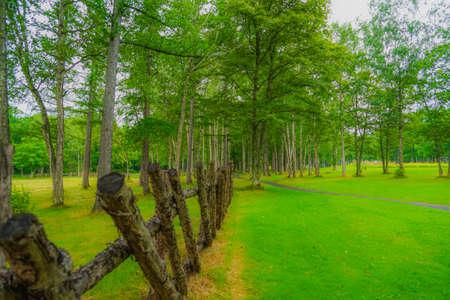 Image in the Hokkaido Furano Forest Фото со стока