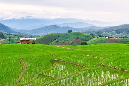 Rice field view at sunset with green rice plant being planted as a staircase in Chiang Mai, Thailand Stok Fotoğraf