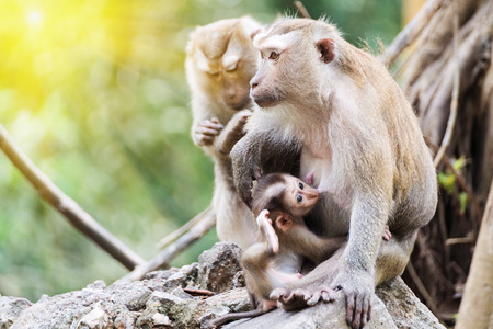 Monkey family sits sunbathing in the morning.