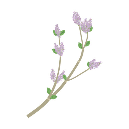 Gray branch with green leaves and purple flowers of lilacs on a white background. Illustration