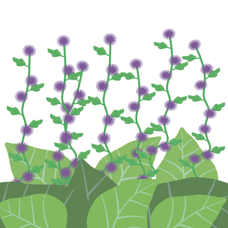 Purple flowers of bur with green leaves of burdock on a white background. Illustration