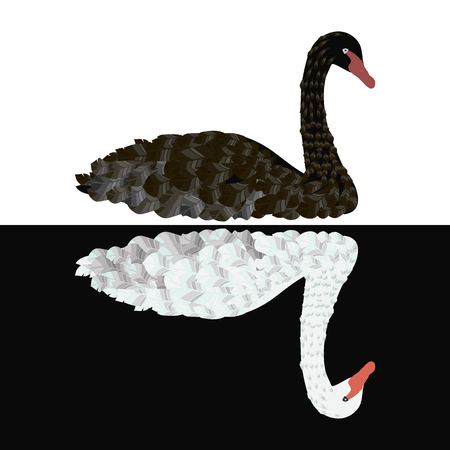 Black swan on white background White swan on black background with red beaks vector isolated illustration