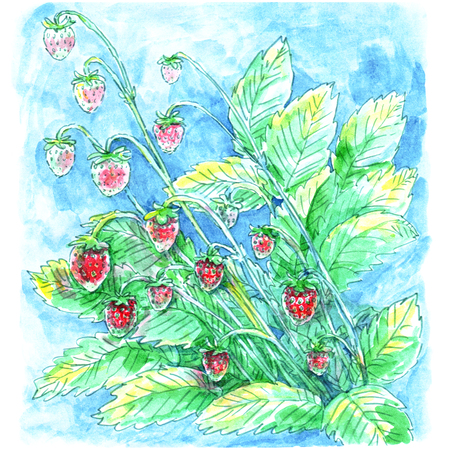 Woman blond thinks dreaming about cosmetics cookies jeans fruit guys white feathers waves water freshness flowers beauty gift ladies female Watercolor drawing illustration. Stock Photo