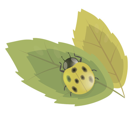Yellow simple ladybug beetle with black specks on a green leaf illustration vector picture isolated on white background.