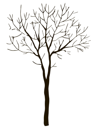 Black vector contour of deciduous thin branched tree without leaves object isolated on white background Ilustração