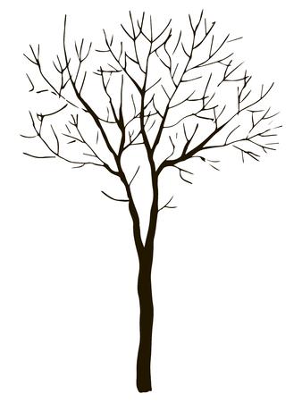 Contour vectoriel noir d'arbre à feuilles caduques mince sans objet feuilles isolé sur fond blanc Vecteurs