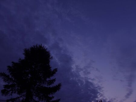 Dark blue evening sky with clouds and black outline of a pine tree silhouette in the lower left corner