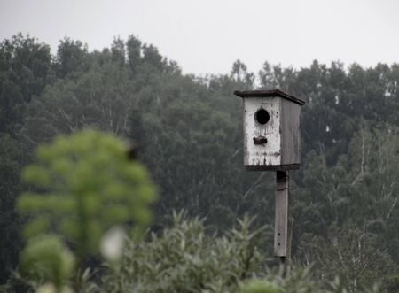 White shabby old birdhouse for birds against the background of distant dark green forest trees.