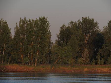 Green summer trees on the river bank illuminated by the orange sun at dawn. Stockfoto