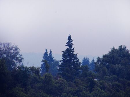 Landscape with deciduous trees and trees in a foggy cool day.