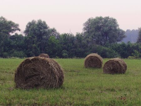 Landscape with green meadow, forest in the distance and twisted haystacks of dry brown hay on a foggy summer day