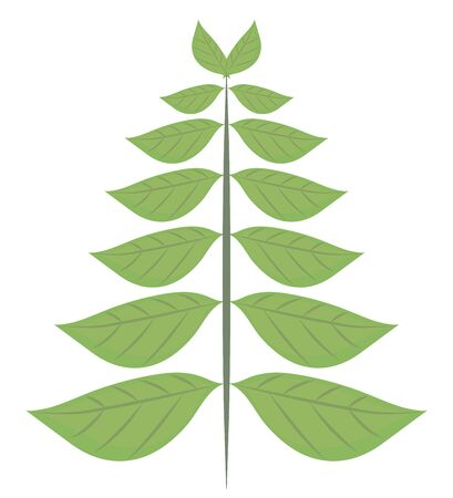 Green ecological vector leafs with veins in the form of a Christmas tree isolated object on a white background.
