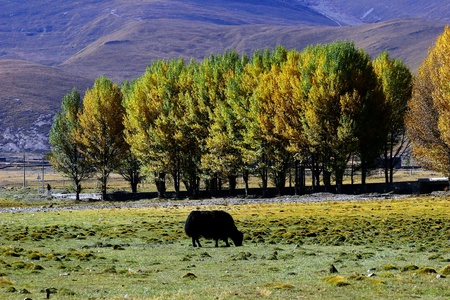 shangrila: Western China Shangri-La and the beauty of nature travel Stock Photo