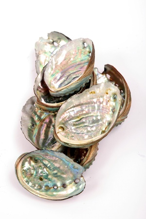 Natural beauty of the abalone shell light Stock Photo