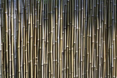 muralla china: Muro de paredbamb� de bamb� zen chino