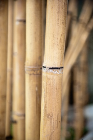 hollow wall: dry bamboo