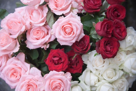 color roses for valentain days photo