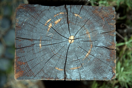 Weathered decaying railway tree rings Stock Photo - 10825106