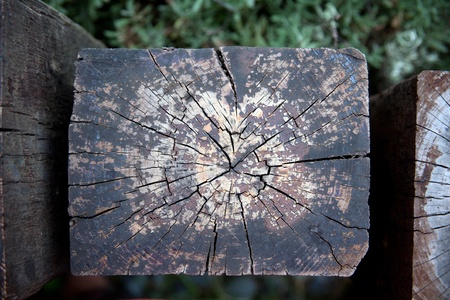 Weathered decaying railway tree rings photo
