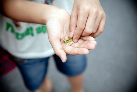 Hands clutching the hand of the little boy grasshopper photo