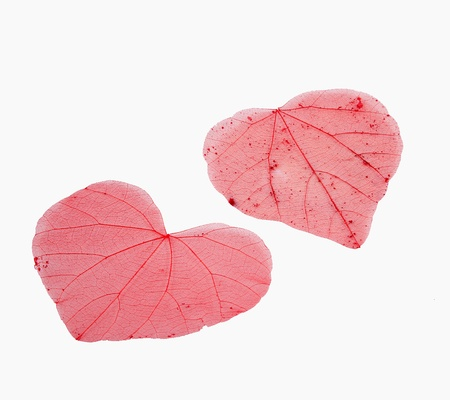 veiny: Heart-shaped transparent leaves with veins Stock Photo