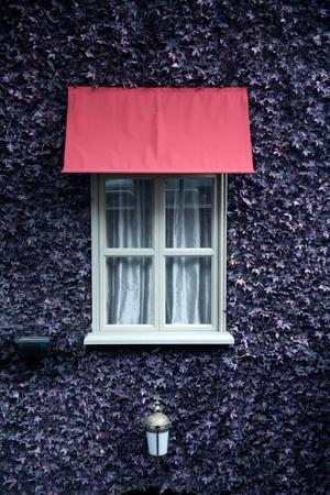 Purple Maple Leaf and decoration/fake Purple Maple Leaf wall and decoration Stock Photo - 12826732