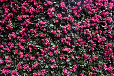 Oleander flower wall with colored tiles photo