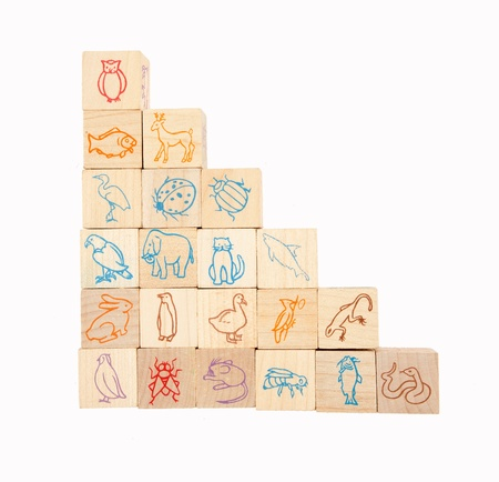 animal wooden blocks eduction blocks photo