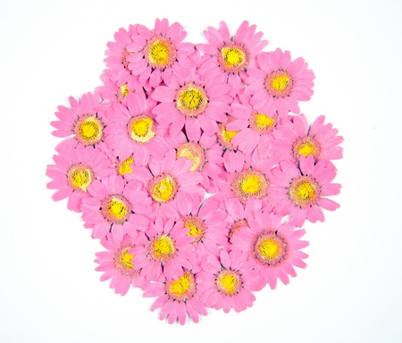 Dried daisies isolated on white photo