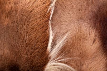 red skinned: Pony skin and hair texture Stock Photo