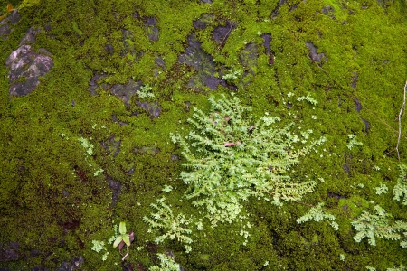 mossy wall with green photo