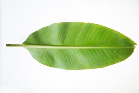 바나나 잎  바나나 녹색 잎