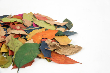 hojas de colores: Hojas de colores en blanco Foto de archivo