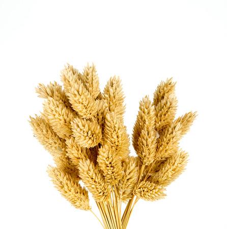 flores secas: Flores secas Canarias