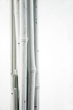 white bamboo on white photo